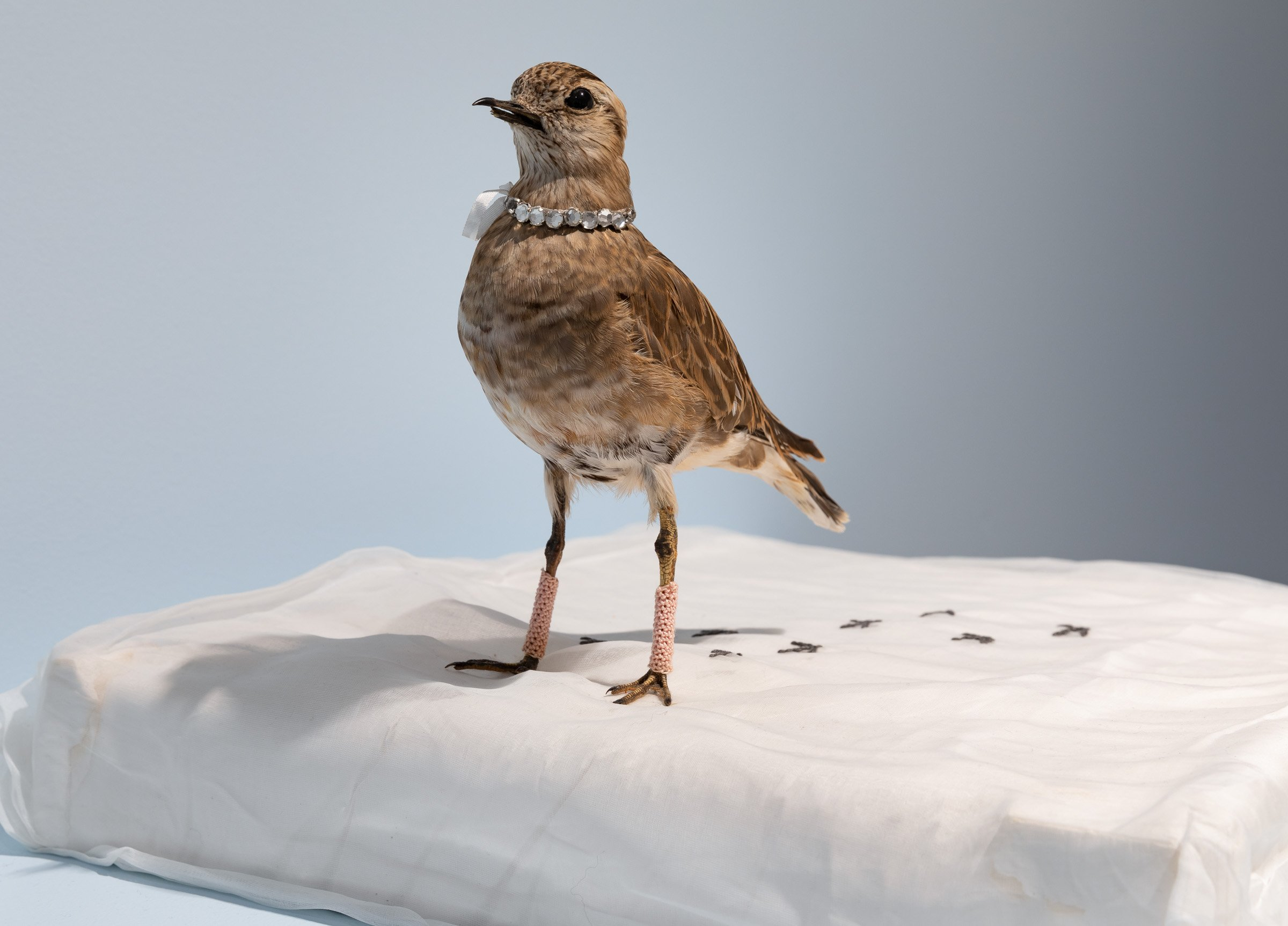 Close-up picture of a taxidermy bird wearing a jewlled necklace and crocheted leg warmers.