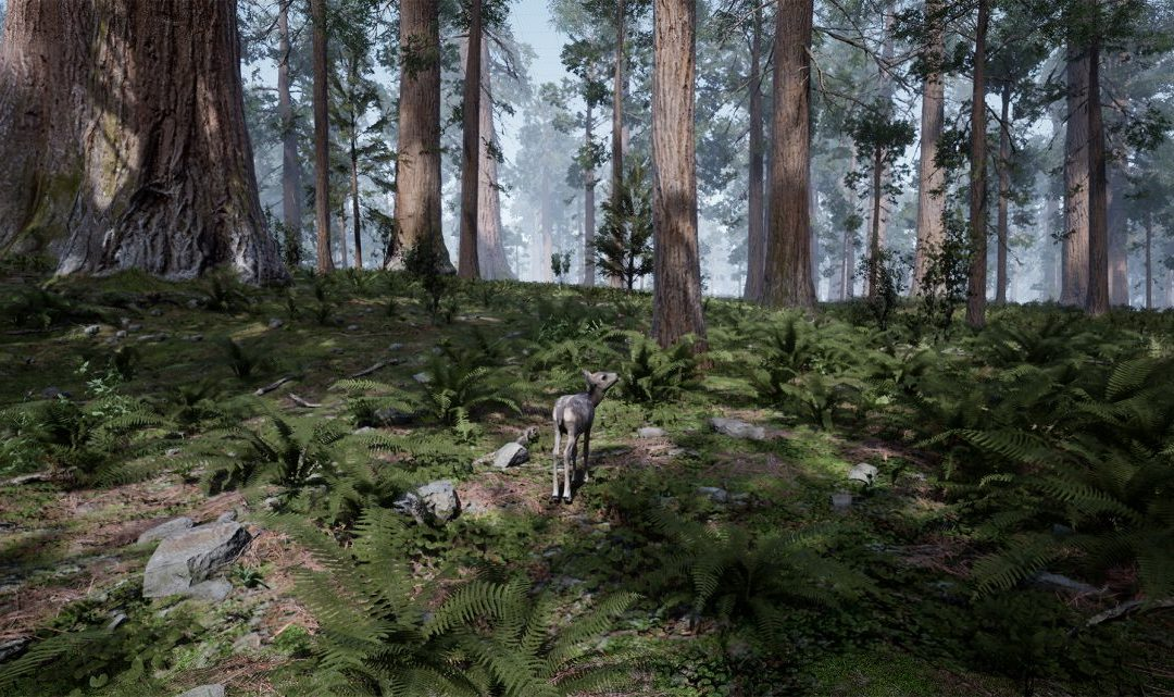 MeMO: Grant Stevens, 'Fawn in the Forest'
